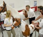 Teachings Veterinary students Vienna